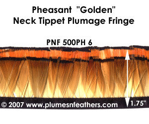 PH6 Pheasant Golden Fringe