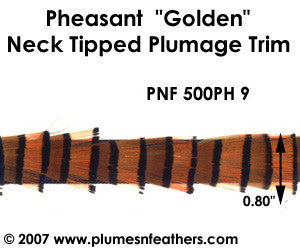 PH9 Pheasant Golden Trim
