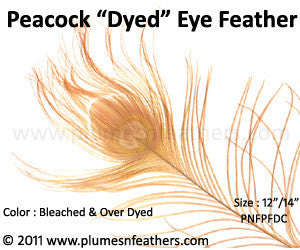Dyed Peacock Eye Only (Cutmoon) 12""