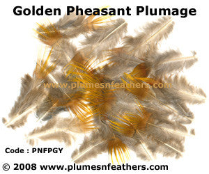 Golden Plumage 'D'