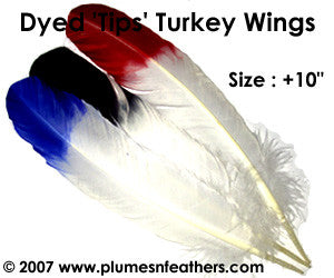 "Turkey Quills -10"" Dyed Tips Selected"