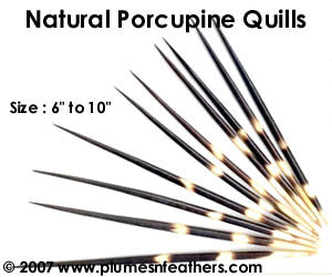 Nat. Porcupine Quill 7""