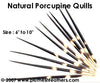 Nat. Porcupine Quill 10""