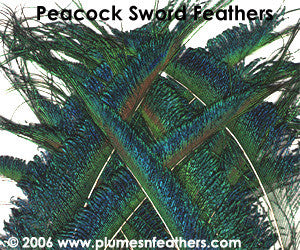 "Nat. Peacock Swords 10""/20"""
