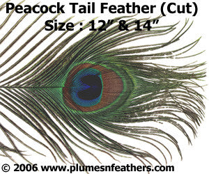 Peacock Cut Eye Feathers