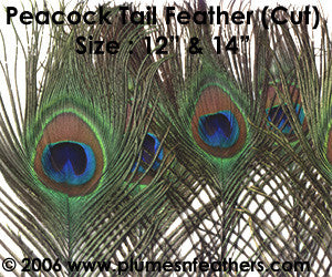 Peacock Eye Only (Cutmoon) 14""
