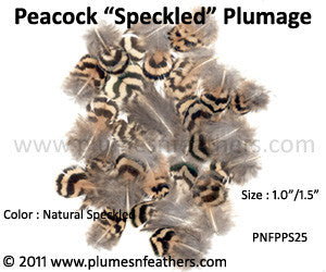 "Speckled Plumage (Iridescent) 25 Pcs. 1""-1.5"""