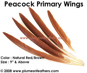 "Peacock Brown Wing Quills 9""/14"""