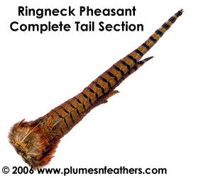 Ringneck Natural Tail Clump