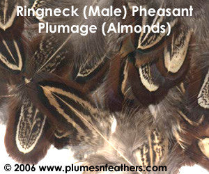 Ringneck Plumage 'Almonds' 'S'