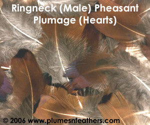 Ringneck Plumage 'Hearts' 'L' 25 Pcs.