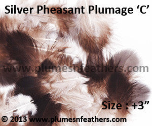 "Silver Pheasant Plumage 3"" Up 'C' 25Pcs Pack"