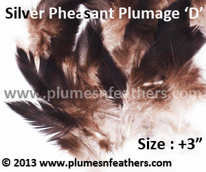 "Silver Pheasant Plumage 3"" Up 'D' 25Pcs Pack"