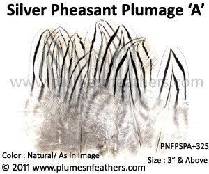 "Silver Pheasant Plumage 3"" Up 'A' 25Pcs Pack"