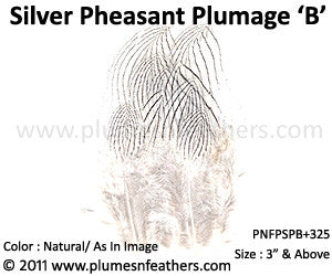 "Silver Pheasant Plumage 3"" Up 'B' 25Pcs Pack"