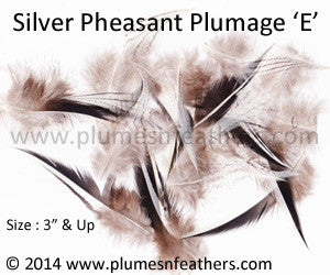 "Silver Pheasant Plumage 3"" Up 'E' 10Pcs Pack"