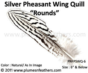 "Silver Pheasant Wing Quills 'Rounds' 6"" Below"