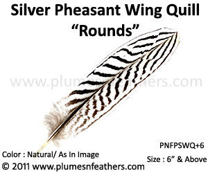 "Silver Pheasant Wing Quills 'Rounds' 6"" Up"