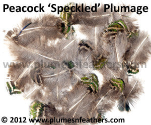 "Speckled Plumage (Iridescent) 25 Pcs. 1.5""-3"""