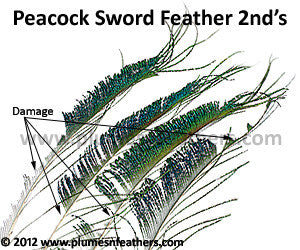 "Nat. Peacock Swords 30""/45"" 2nd's"
