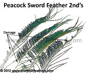 "Nat. Peacock Swords 20""/30"" 2nd's"