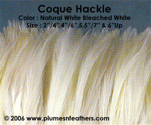 "Bleached White Or Dyed Strung Hackle Feathers +5"" ½ Oz."