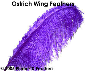 "Ostrich Wing Dyed 22""/25"""