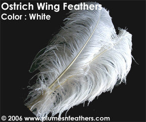 "Ostrich Wing Bl. White 13""/17"""