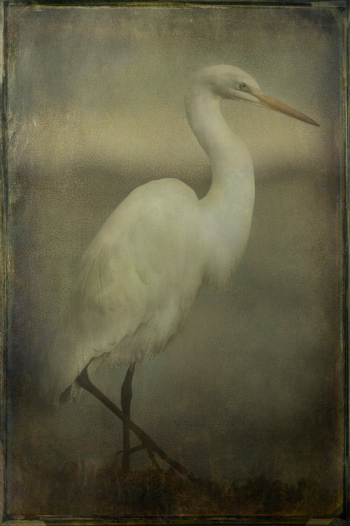 Feathered Portrait n.1 Honorable Mention at 10th Annual International Color Awards