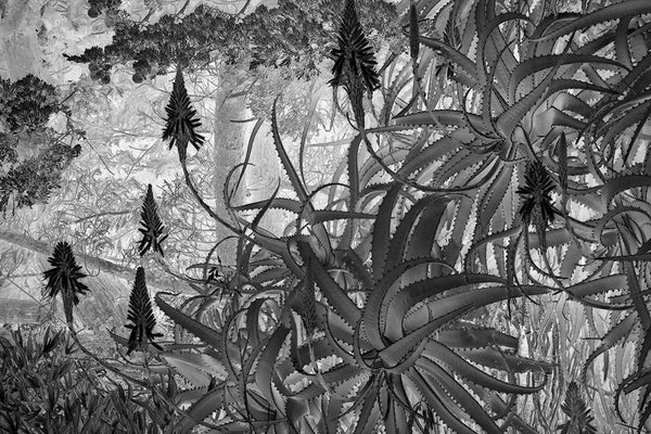 Aloe Vera Garden - Eduardo Fujii, 12th Spider Awards Photographer of the Year