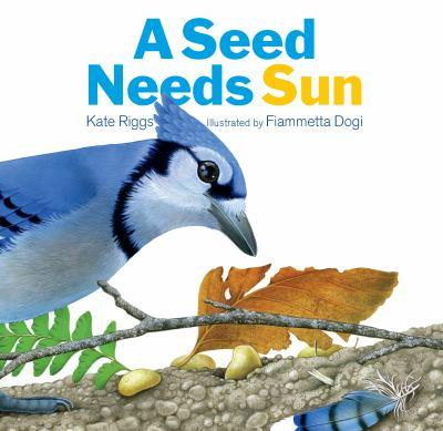 The Creative Company A Seed Needs Sun