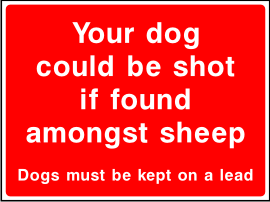 Your dog could be shot if found amongst sheep sign.