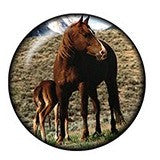 Diva Dot Snap Button, Horse and Colt, Glass