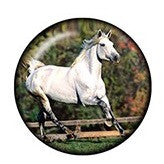 Diva Dot Snap Button, Horse, Glass