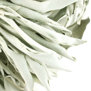 White Sage Leaf Whole Wildcrafted