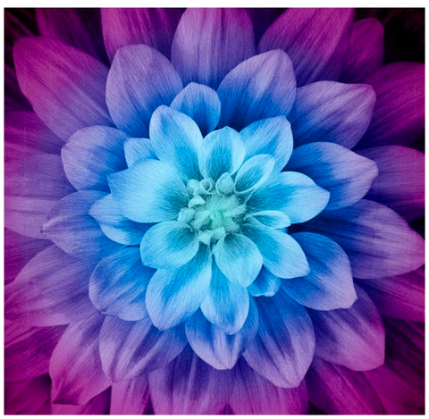 "Dream Big Floral Aurora Fabric Digital 44"" Panel"
