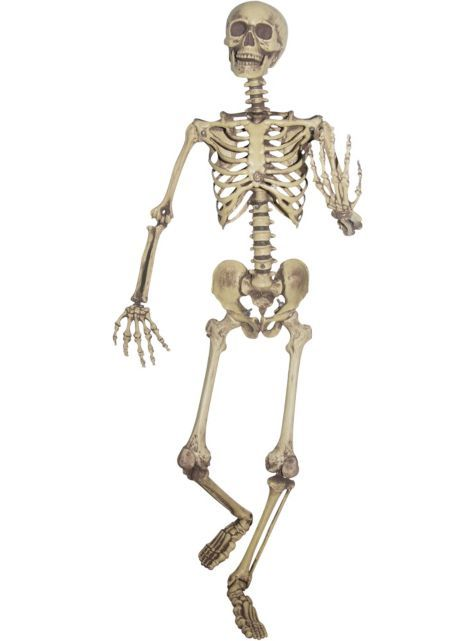 Fake Life Size Skeleton