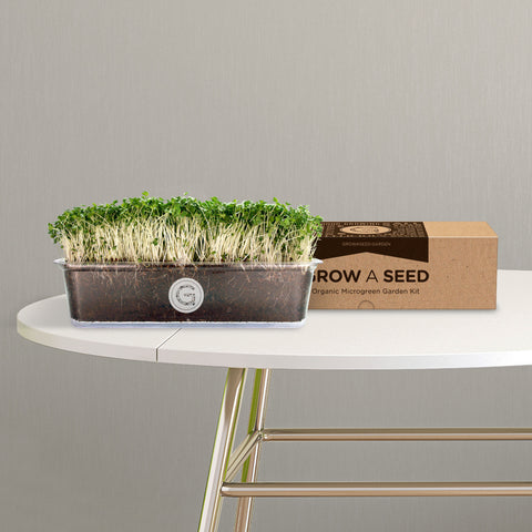 Organic Broccoli Microgreen Garden Kit