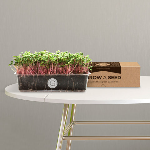 Organic China Rose Radish Microgreen Garden Kit