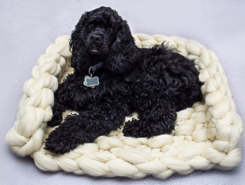 Merino Wool, Rectangular Dog Bed, Chunky Merino Wool