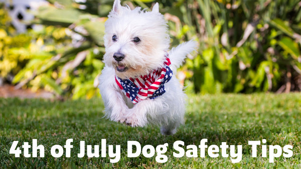 Fourth of July Dog Safety Tips