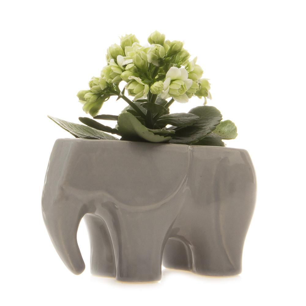 Ceramic Elephant Planter - Grey