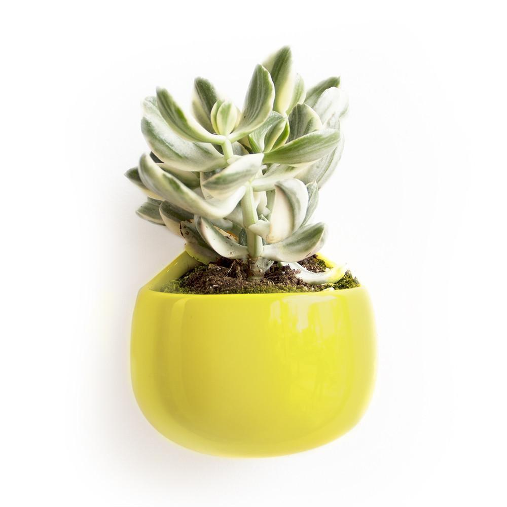 Wall Nest Planter - Green Sheen