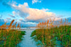 Path To Beach,  Fernandina Beach 1
