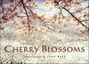 Cherry Blossoms Book