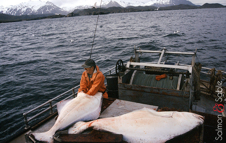Halibut (Fall Catch)