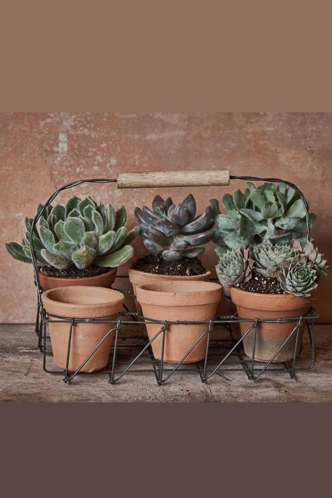 Jara Terracotta Planter Set | 6 Pots