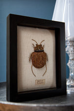 Beaded Stag Beetle