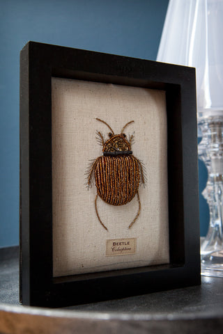 Beaded Fat Beetle