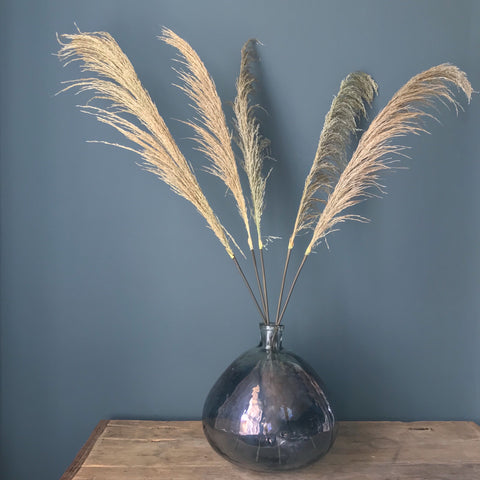 Pampas Grass Spray